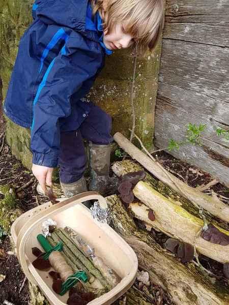 Junior fungi foraging