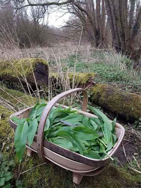 Sussex Trug full of Wild Garlic