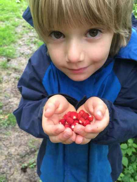 Kids foraging wild strawberries