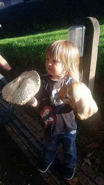Toddlers foraging fungi