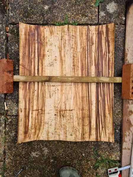 Sweet chestnut bark flattened