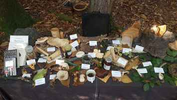 Fungi table display