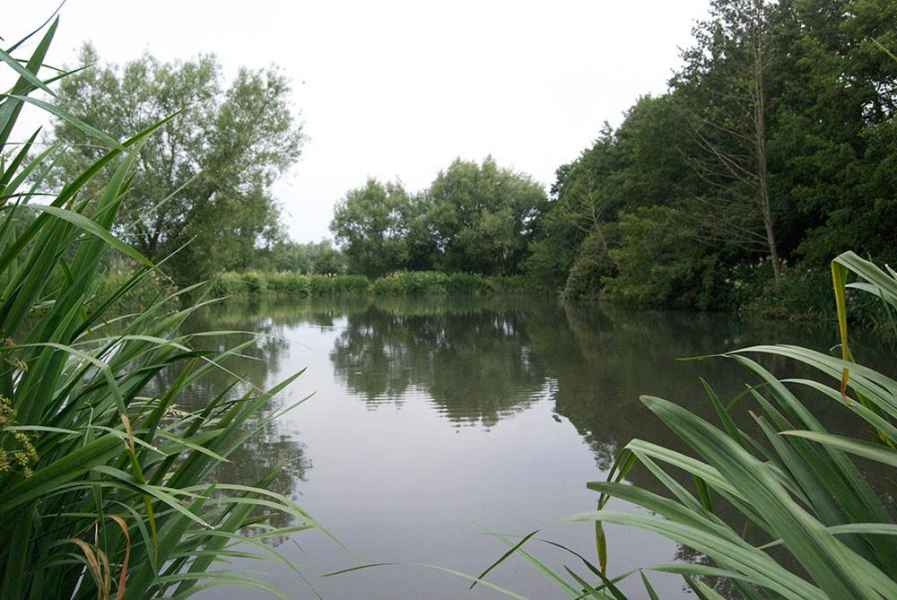 Coltsford Mill - Willow Pool